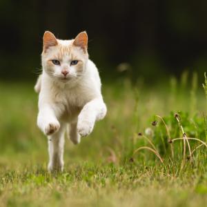 Advance gato