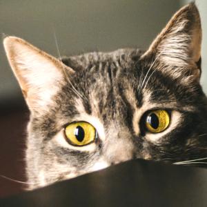 Libra gato